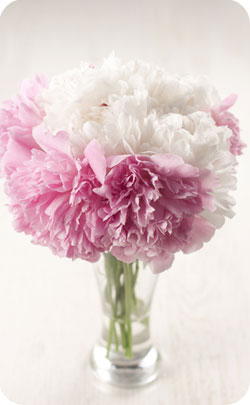 12th year anniversary appropriate flower peonies image