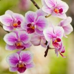 orchids modern wedding anniversary gifts